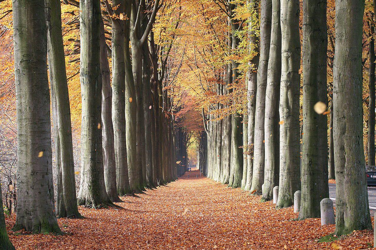 Fall Training – Ride Like a Kid Again