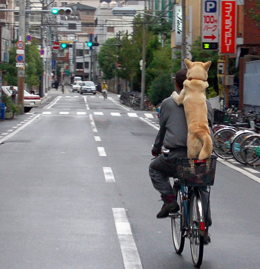 Dog Bicycle